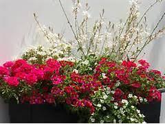blumenkasten fã r balkon pflanzen für balkon balkon sichtschutz mit pflanzen natur pur auf
