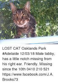 Lost Cat Meme - lost cat oaklands park adelaide 120318 male tabby has a little