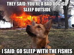 Bad Dog Meme - bad dog memes quickmeme