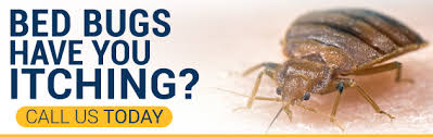 Bed Bug Com Phoenix Bed Bug Treatment Bed Bug Extermination Guaranteed