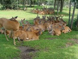 Wisconsin wildlife tours images Mussoorie tour jpg