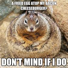 Squirrel Meme - american squirrel meme by tho2994mp memedroid