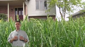 how to plant native grasses why is my grass going to seed youtube