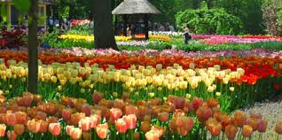 Images Of Tulip Flowers - flower garden pictures pictures of beautiful flower gardens