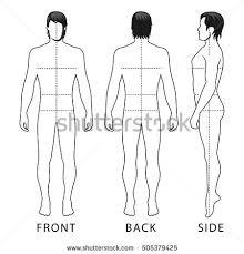 royalty free male anatomy sketch 10135411 stock photo avopix com