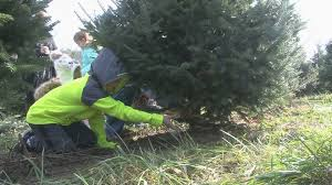 picking out a christmas tree is family experience at feisley tre