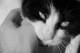 cat time u2013 diary of dennis