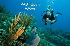 sentinel divers dive in pattaya thailand