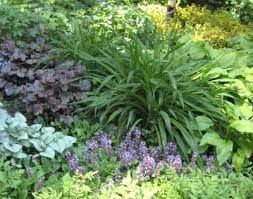 Tropical Plants For Garden - plants for shaded garden add drama with tropical plants shade