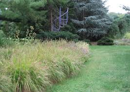 it s showtime for ornamental grasses homestead gardens inc