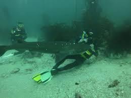 scuba dive with cow sharks scuba dive courses cape town