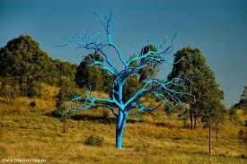 Mt Annan Botanical Garden The Blue Tree Picture Of The Australian Botanic Garden Mount