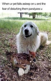 Happy Dog Meme - 27 ridiculously happy dog memes to brighten your day blazepress