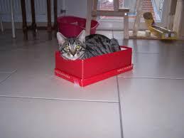 comment fabriquer un arbre a chat comment fabriquer un arbre a chat chats forum animaux