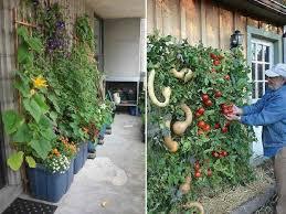 easy diy vertical garden ideas picture 5 cncloans