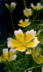 54 best the color yellow images on pinterest yellow flowers
