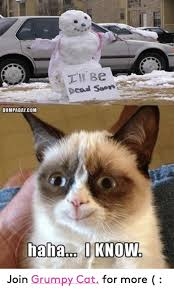Soon Cat Meme - be dead soon dumpaday com haha i know join grumpy cat for more