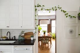 rubber plant our best tips for growing and care apartment therapy