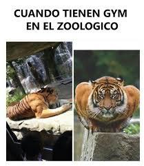 Memes De Gym En Espa Ol - gym memes en español photos facebook