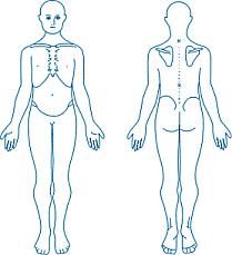 Directional Terms Human Anatomy Anatomicalposition Gif