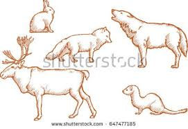 arctic land animals set sketch stock vector 647477185 shutterstock