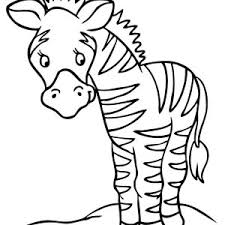 baby zebra coloring page free download