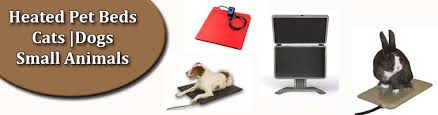 Cats In Dog Beds Plug In Heated Pet Beds