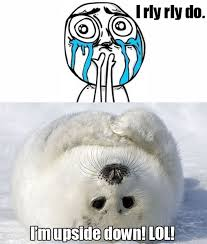 Baby Seal Meme - that s so meme baby harp seal conversations