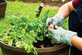container vegetable gardening 101 farm and garden grit magazine