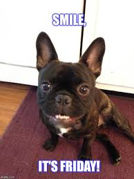 What Is Meme In French - french bulldog imgflip