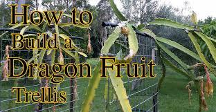 how to build a dragon fruit pitaya trellis youtube