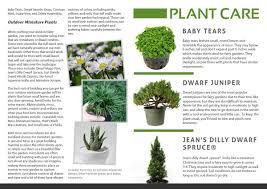 12 Best Plants That Can by Fairy Garden Magazine Issue 1 Page 13