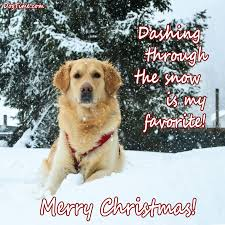 30 dog christmas cards you can share with your friends and family