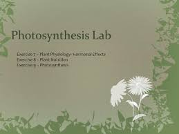 Lab Bench Photosynthesis Photosynthesis Color And Wavelengths Live Love Leaf Emmie
