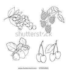 berries hand drawn seamless pattern black stock vector 673030924