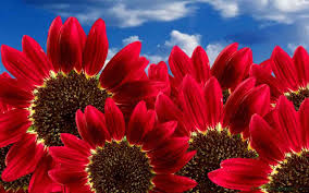 types of red colors types of flowers red mehmetcetinsozler com