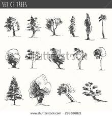 set hand drawn tree sketches oak stock vector 475977724 shutterstock