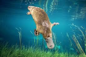 imagenes animales australia lista naturaleza salvaje fauna extrema de australia
