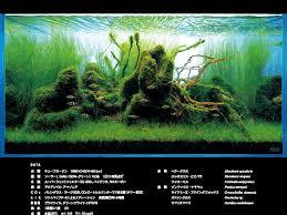 Aquascape Inspiration 638 Best Aquascape Layout Inspiration Images On Pinterest