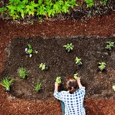 how to plant vegetables garden ideas