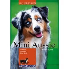 australian shepherd 8 stunden alleine hund des monats juli der mini aussie sitzplatzfuss