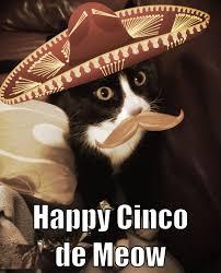 Cinco De Mayo Meme - cinco de mayo cat meme mne vse pohuj