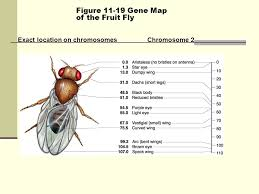 section 11 5 linkage and gene maps worksheet answers the best