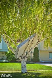 worst tree house at lethbridge daily photo dose