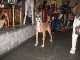 boxer dog statue boxer dog jr 2936 the jolly roger life size 3d models