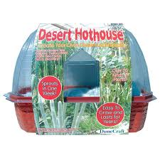 mini desertscape cactus growing glass terrarium kit educational