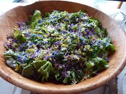 cuisiner les herbes sauvages cuisine plante sauvage en cuisine plante sauvage en plante