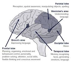 Which Part Of The Brain Consists Of Two Hemispheres Executive Dysfunction Headway