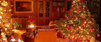 fraser fir christmas trees for sale in newland nc sugar