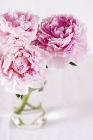 pianese flowers about peonies peony care tips and occasions interflora